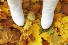 在秋天秋天黄色槭树的背景的白色起动离开 图库摄影
