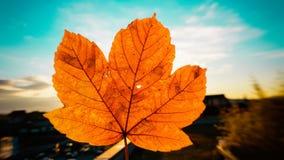在秋天红色和黄色色的叶子的日落光照亮和渗透的想法小孔 免版税库存照片