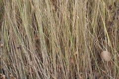 在秋天纹理的黄色草 免版税库存图片