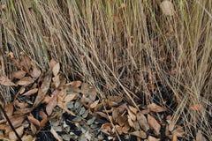 在秋天纹理的黄色草 库存图片