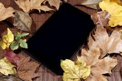 在秋天背景的片剂 库存照片