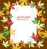在秋天背景的白纸与另外种类叶子 库存照片