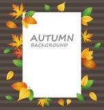 在秋天背景的白色白纸与另外种类叶子 库存图片