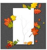 在秋天背景的白色空白与槭树离开 库存照片