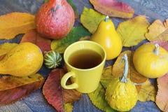在秋天背景的茶杯 库存照片