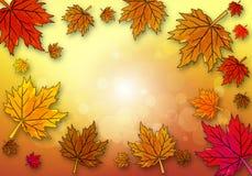 在秋天背景的黄色枫叶 库存图片