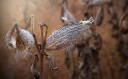 在秋天草甸的蓟 库存图片