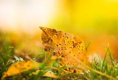 在秋天草的下落的叶子 库存照片