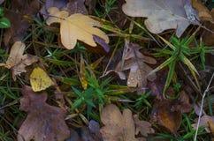 在秋天草的下落的黄色叶子 图库摄影