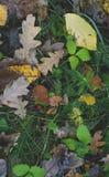 在秋天草的下落的黄色叶子 库存照片