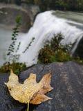 在秋天附近的新秋天 免版税库存照片