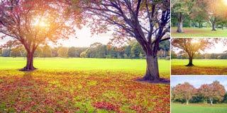 在秋天集合的日落 库存图片