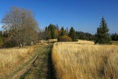 在秋天领域在Gorce山,波兰的道路 库存图片