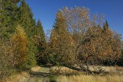 在秋天领域在Gorce山,波兰的道路 库存照片