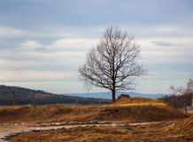 在秋天领域的偏僻的树 免版税库存照片