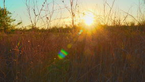 在秋天领域的日落 太阳的光芒通过干草 股票视频