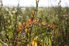 在秋天领域的野生植物 免版税库存图片