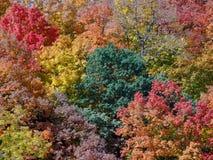在秋天颜色中间的绿色树 免版税库存图片