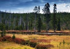 在秋天颜色期间的刘易斯河在黄石国家公园, Wyo 库存照片