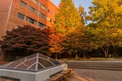 在秋天颜色的发辫在软的阳光沐浴了 免版税库存图片