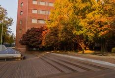 在秋天颜色的发辫在软的阳光沐浴了 库存照片