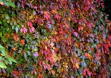 在秋天颜色的叶子 免版税库存照片
