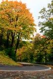 在秋天颜色的弯曲道路 免版税库存照片