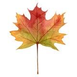 在秋天颜色的枫叶,水彩手凹道例证,隔绝在白色背景 免版税图库摄影