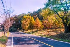 在秋天颜色的树在路旁边在乡下 免版税库存图片