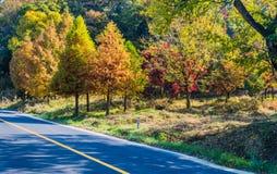 在秋天颜色的树在路旁边在乡下 免版税库存照片