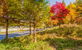 在秋天颜色的树在路旁边在乡下 库存照片