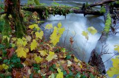在秋天颜色的灌木在一条河的河岸,有青苔的盖了跨接急流的日志 免版税库存图片