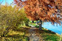 在秋天颜色的道路 库存图片