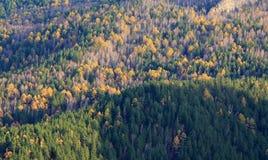 在秋天颜色的Taiga横向 库存图片