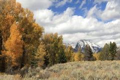 在秋天颜色,盛大Tetons Nationa的亚斯本和棉花木树 图库摄影
