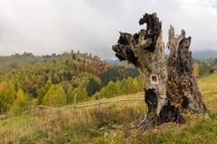 在秋天风景的大腐烂的树干 免版税库存照片