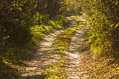 在秋天风景的梦想的森林土路 免版税库存图片