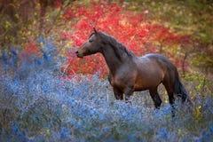 在秋天风景的海湾马 库存图片
