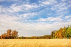 在秋天风景的燕麦领域 库存图片