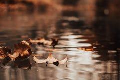 在秋天风景的秋叶 免版税库存照片