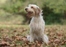 在秋天风景的逗人喜爱的公狗 免版税库存图片