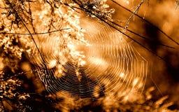 在秋天风的不平稳的蜘蛛网摇动 库存照片