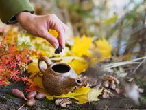 在秋天黄色叶子背景的水壶  库存图片