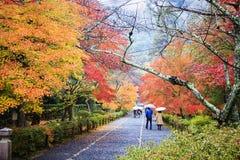 在秋天,日本的槭树季节 免版税库存图片