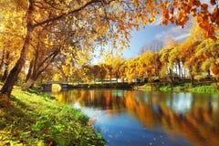 在秋天,黄色叶子,反射筑成池塘 库存图片