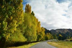 在秋天黄色叶子穿戴的树在坎特伯雷排行了路 库存图片