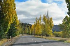 在秋天黄色叶子穿戴的树在坎特伯雷排行了路 免版税库存图片