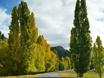 在秋天黄色叶子穿戴的树在坎特伯雷排行了路 库存照片