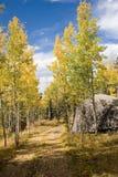 在秋天1的森林公路 库存图片
