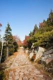 在秋天Karkonosze山的足迹 图库摄影